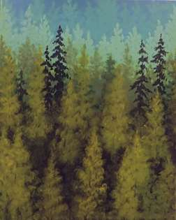 50 Shades of Green Forest