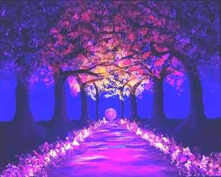 Blossoms Aglow