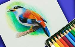 Colored Pencil Drawing Class