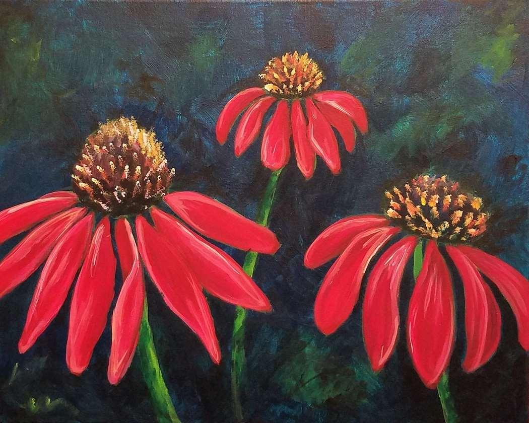 Coneflowers In Bloom