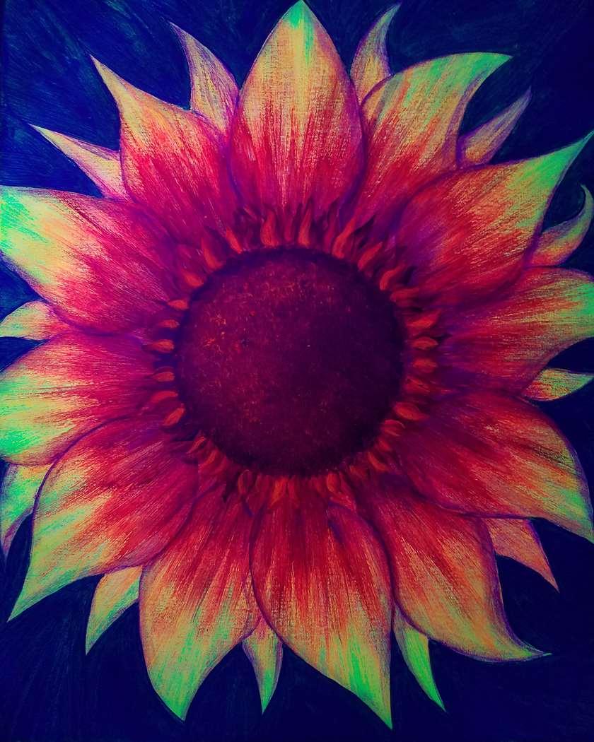 Firecracker Sunflower (under Blacklight)