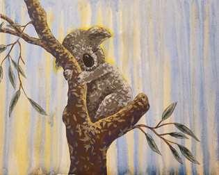 Koala Kare