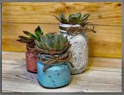 Paint and Plant Succulents