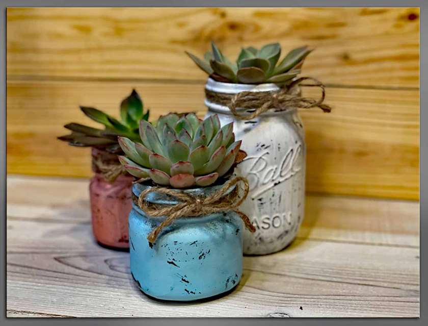 Paint and plant succulents! Everything included