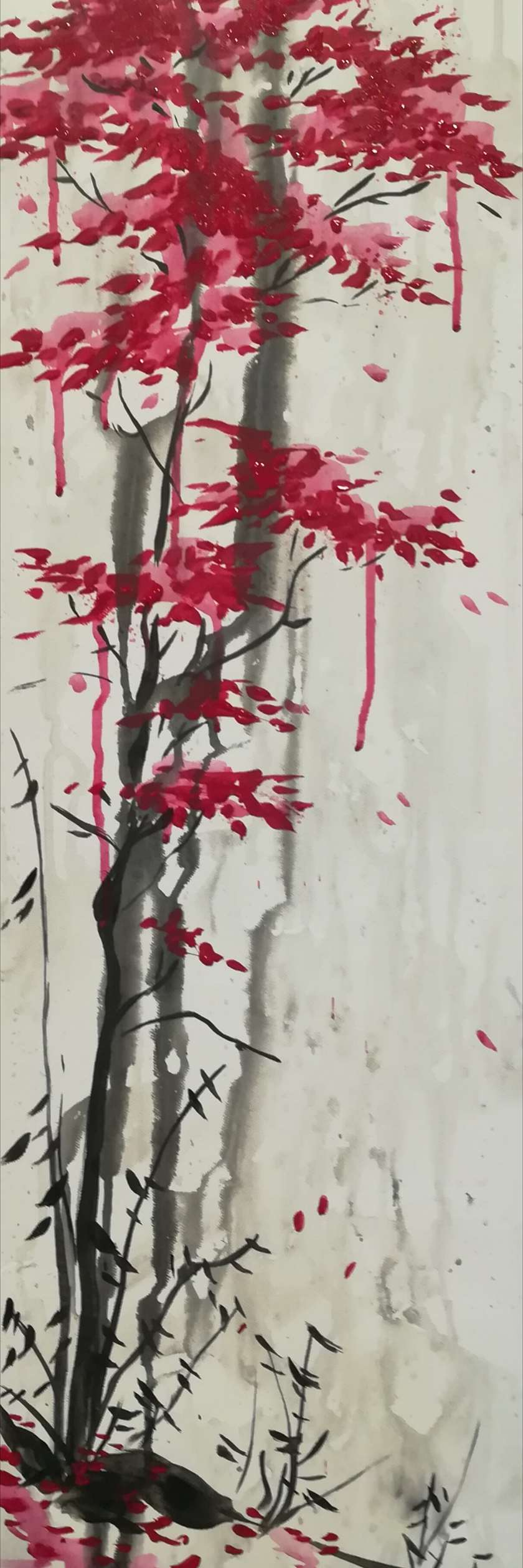 Sumi Maple Tree