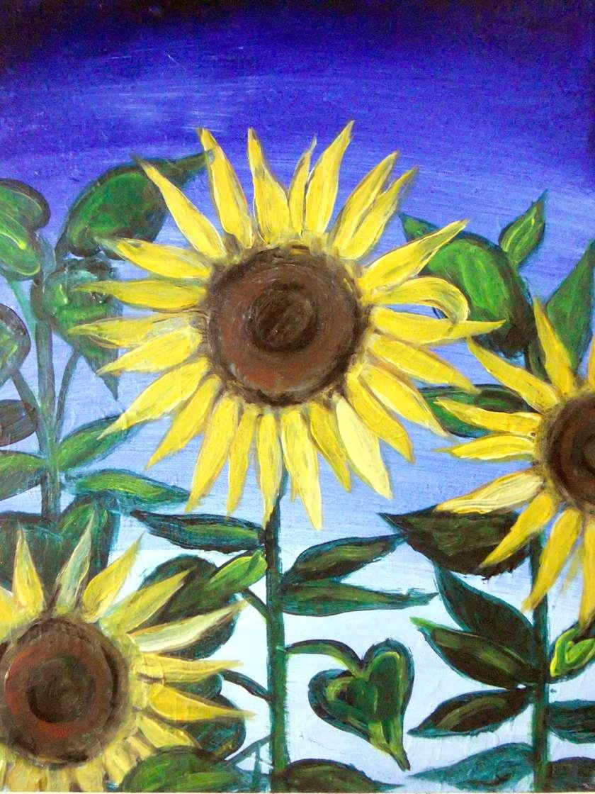 Sunflower Stalks